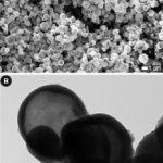 Photo-polymerized polypyrrole microvessels.